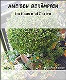 Ameisen bekämpfen: Im Haus und Garten