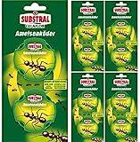 Celaflor Ameisen-Köder - mit schneller und zuverlässiger...